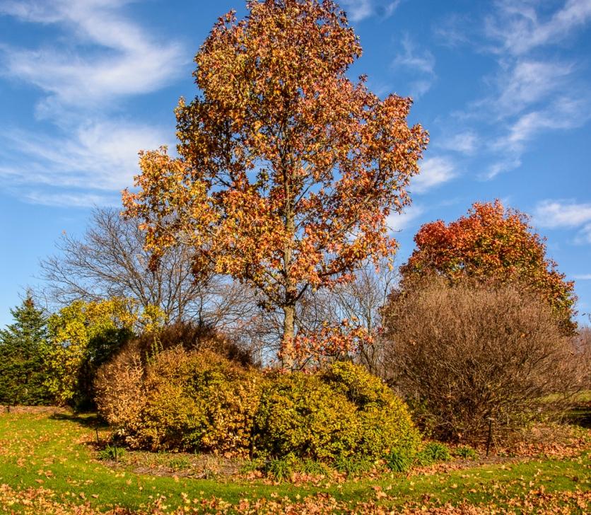2015_11_01_Holden Arboretum_008