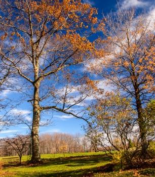 2015_11_01_Holden Arboretum_009