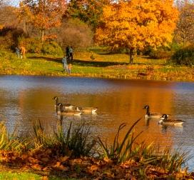 2015_11_01_Holden Arboretum_022