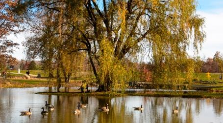 2015_11_01_Holden Arboretum_024