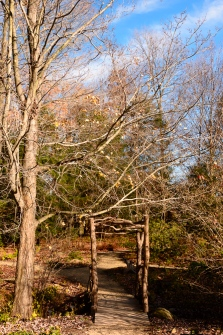 2015_11_01_Holden Arboretum_026