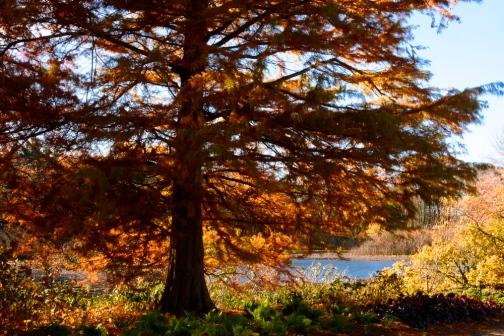 2015_11_01_Holden Arboretum_032