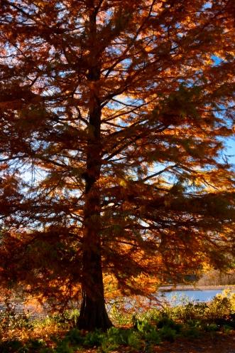 2015_11_01_Holden Arboretum_034