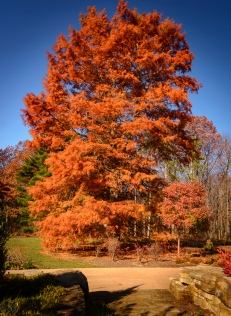 Same tree-another angle
