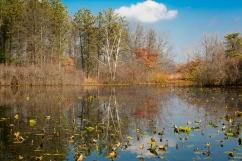 Blueberry Pond