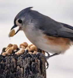 Found a peanut!