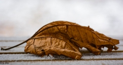 Playing with a leaf on a snowy picnic table