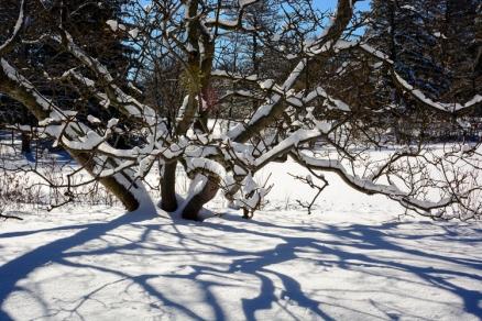 2016_02_18_Trailwalk_Holden Arboretum_0023-Edit-2