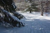 2016_02_18_Trailwalk_Holden Arboretum_0025