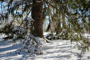2016_02_18_Trailwalk_Holden Arboretum_0030-Edit