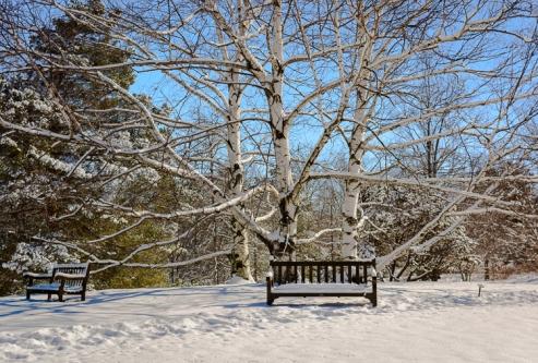2016_02_18_Trailwalk_Holden Arboretum_0037