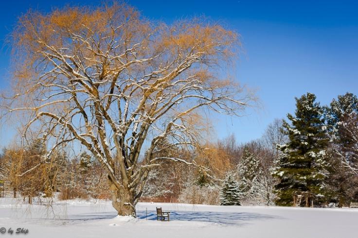 2016_02_18_Trailwalk_Holden Arboretum_0052