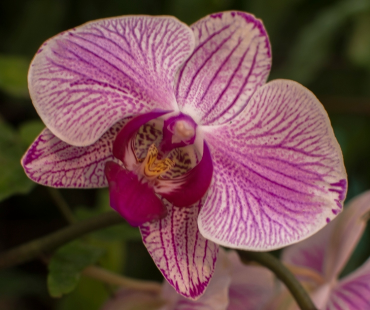 2016_02_26_Trailwalk_Botanical Garden_0015