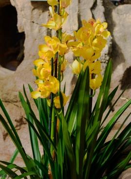 2016_02_26_Trailwalk_Botanical Garden_0026