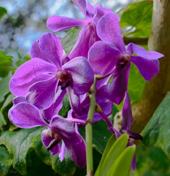 2016_02_26_Trailwalk_Botanical Garden_0063