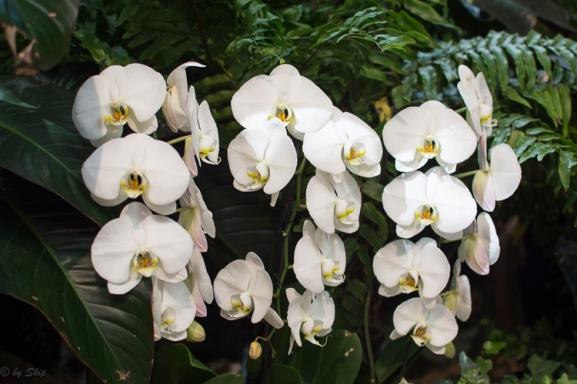 2016_02_26_Trailwalk_Botanical Garden_0140