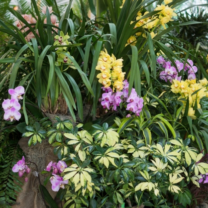 2016_02_26_Trailwalk_Botanical Garden_0145