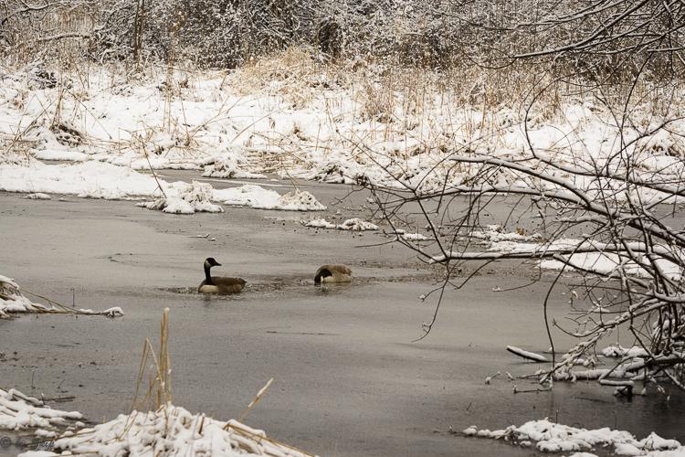 2016_03_04_Trailwalk_Chagrin River Park_0014