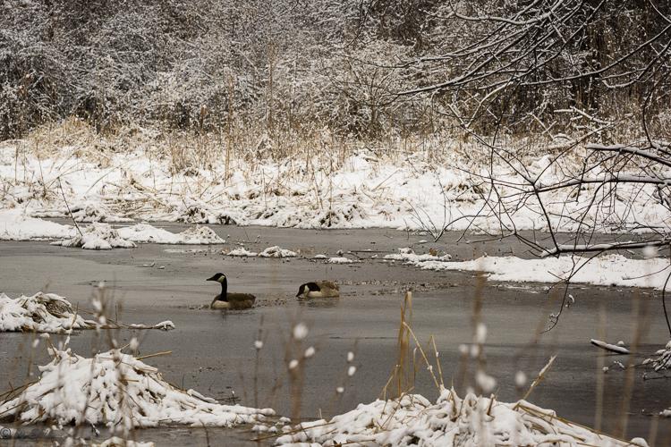 2016_03_04_Trailwalk_Chagrin River Park_0019