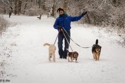 Chris walking his dogs