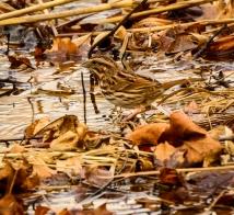 unidentified bird in the bog