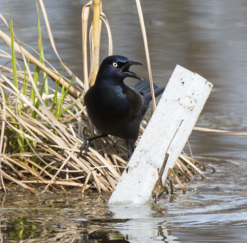 2016_04_13_Trailwalk_Chagrin River Park_0223