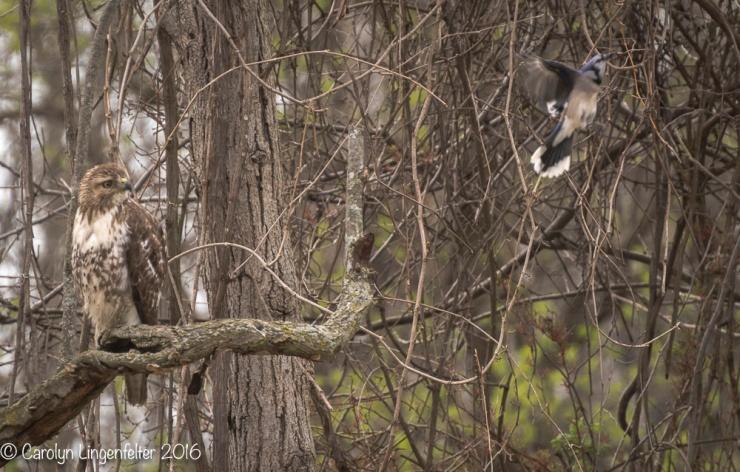 2016_04_25_Trailwalk_Chagrin River Park_0091