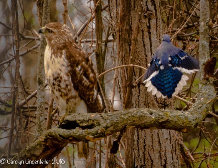 2016_04_25_Trailwalk_Chagrin River Park_0094