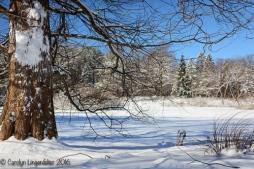 2016_02_18_Trailwalk_Holden Arboretum_0009