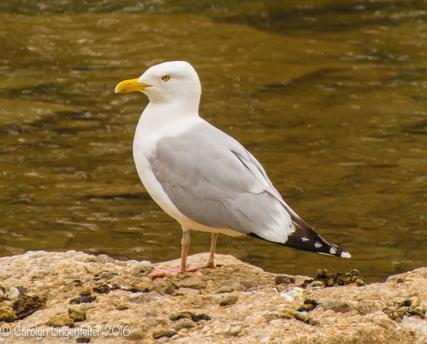 2016_05_09_Trailwalk_Chagrin River Park_0056