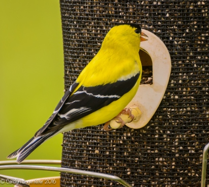 He discovered that I just refilled the feeder.