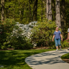 A trail in the rhododendron garden