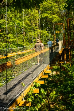 The Canopy Walk sways when many people are on it.