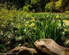 Wildflowers in the bog