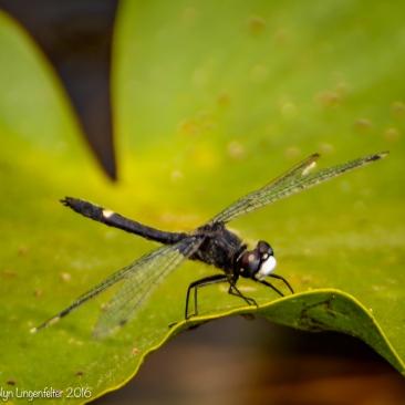 ...dragonflies were everywhere.