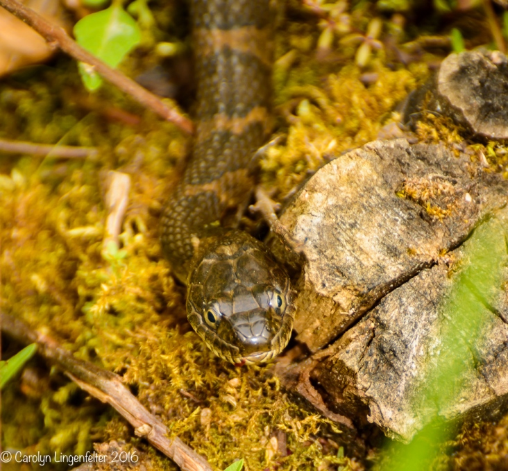 A small water snake...