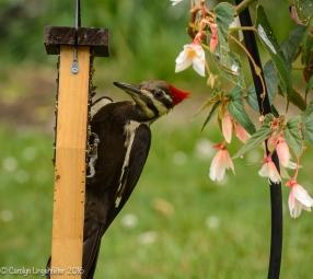 2016_06_15_backyard birding_back yard buffet_0081