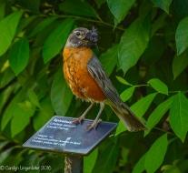 2016_06_25_Trailwalk_Holden Arboretum_0040-Edit