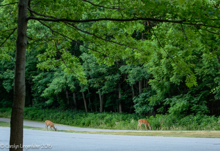 2016_07_03_Trailwalk_Chagrin River Park_0166-Edit