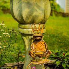 2016_07_30_backyard birding_back yard buffet_0069