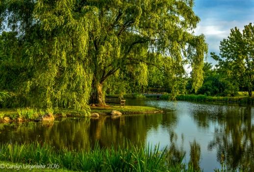 2016_07_06_Trailwalk_Holden Arboretum_0047-Edit