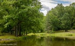 2016_07_15_Trailwalk_Holden Arboretum_0012
