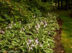 2016_07_15_Trailwalk_Holden Arboretum_0013