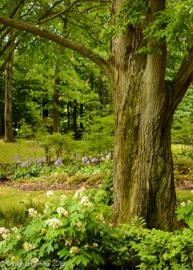 2016_07_15_Trailwalk_Holden Arboretum_0015