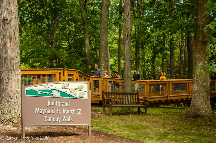2016_07_15_Trailwalk_Holden Arboretum_0019