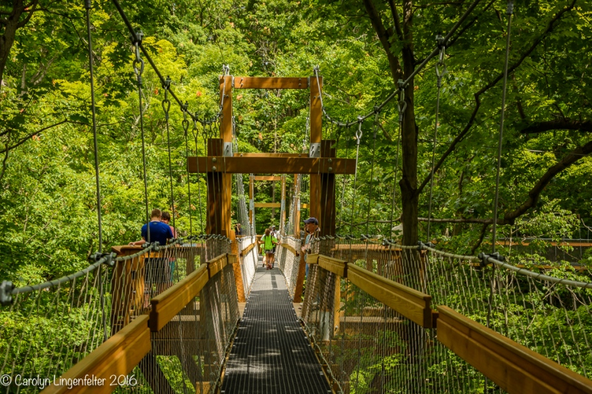 2016_07_15_Trailwalk_Holden Arboretum_0029