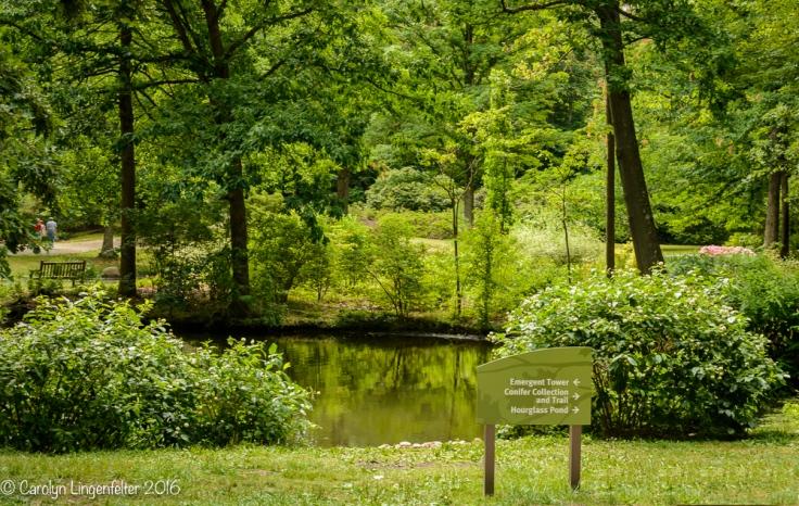 2016_07_15_Trailwalk_Holden Arboretum_0041-Edit