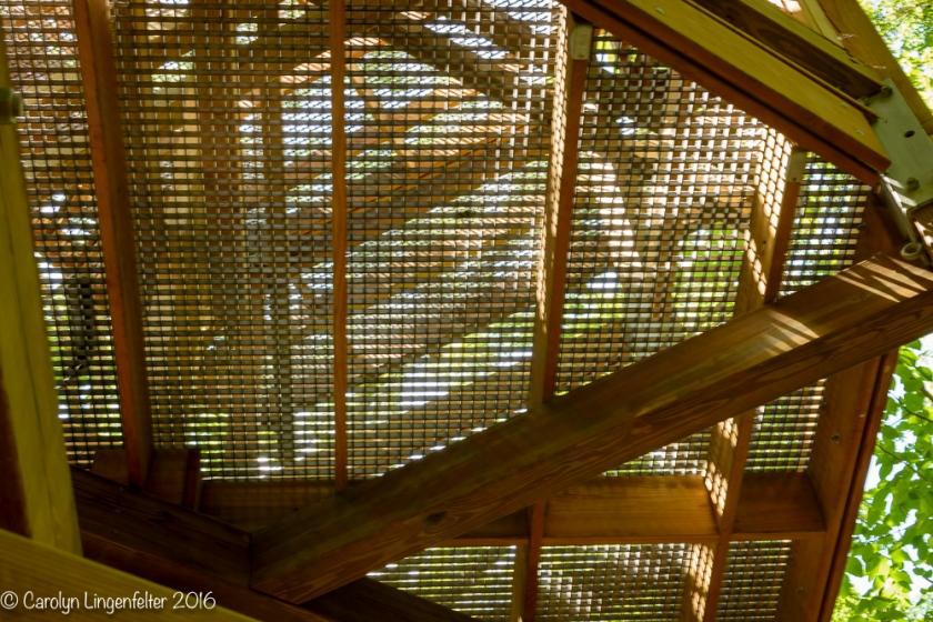 2016_07_15_Trailwalk_Holden Arboretum_0047