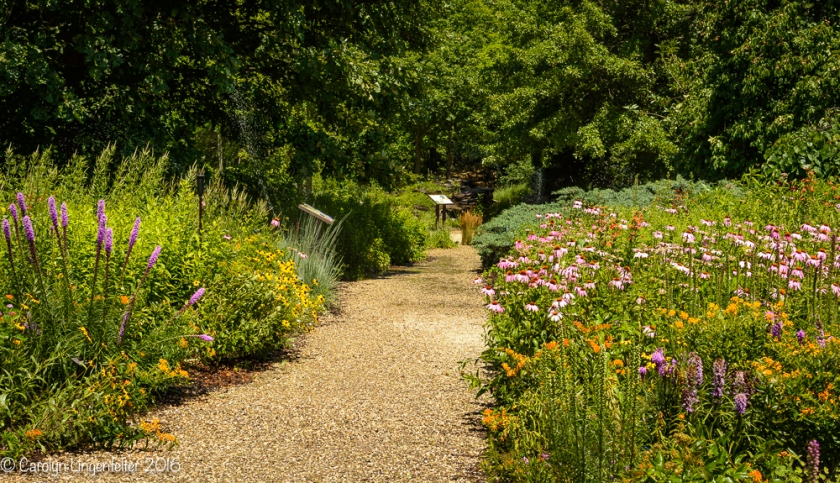 2016_07_15_Trailwalk_Holden Arboretum_0085