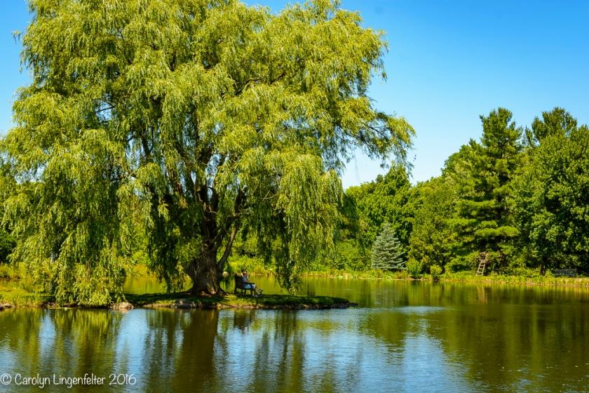 2016_07_15_Trailwalk_Holden Arboretum_0087